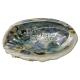 Davartis - Räuchermuschel Seeohr Muschel - 10-16cm