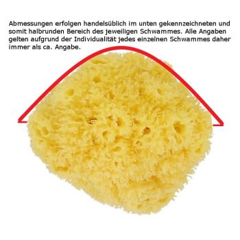 Naturschwamm / Dekoschwamm Mittelmeer Premium Tiefsee XXL - ca. 45cm - Rarität #4