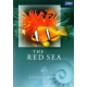 Natures Beauty - The Red Sea
